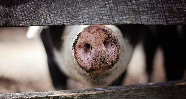 双汇郑州屠宰厂因非洲猪瘟疫情将暂停六周生产
