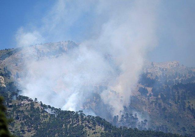 俄雅尔塔附近自然保护区发生面积为500平米山火