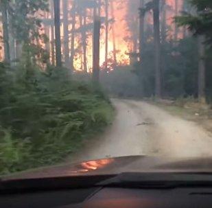 """美国父子自驾游遇森林大火上演""""穿越火海"""""""