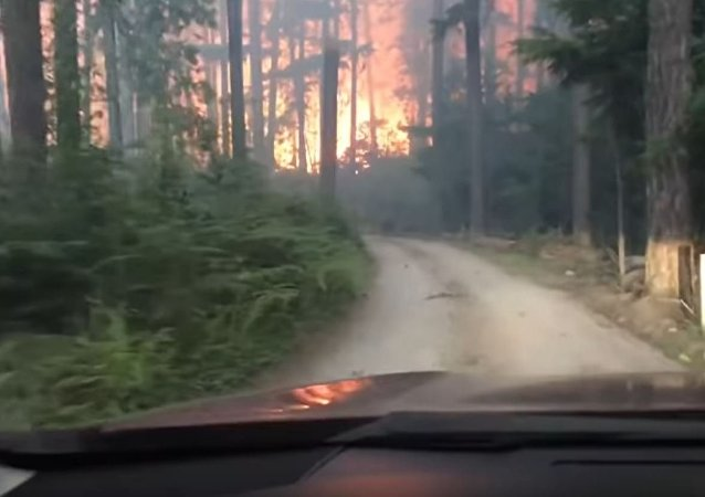 美國父子自駕游遇森林大火上演「穿越火海」