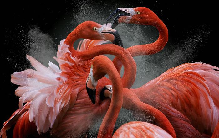 2018年度鸟类摄影师大赛获奖者