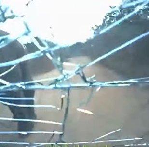 """斯里兰卡汽车遇""""拦路象""""挡风玻璃被打碎"""