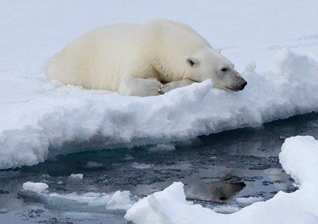 氣候學家提醒:北極多年海冰正在消失