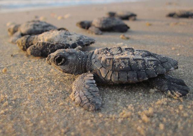 古生物学家发现龟祖先的长相