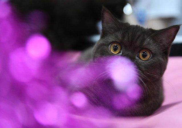一隻肥貓因自己的驚人變化使自己變成了網紅