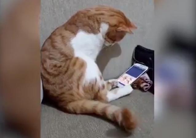 猫咪用手机看已故主人  网友直呼好心疼