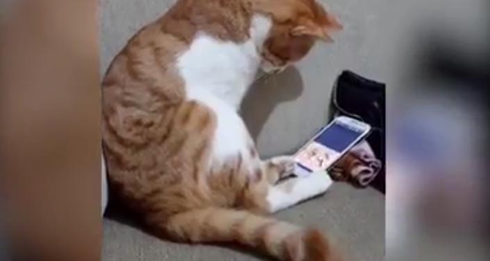貓咪用手機看已故主人  網友直呼好心疼
