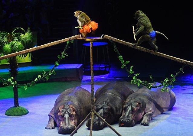 俄政府出台决议 禁止驯兽员伤害马戏团动物
