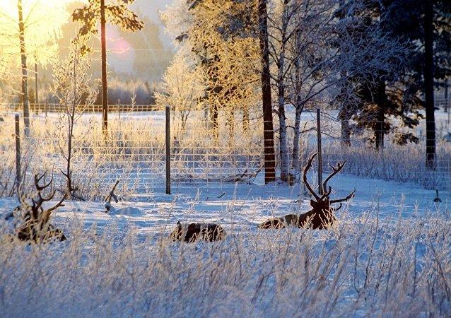 芬兰土著人反对在拉普兰修建铁路