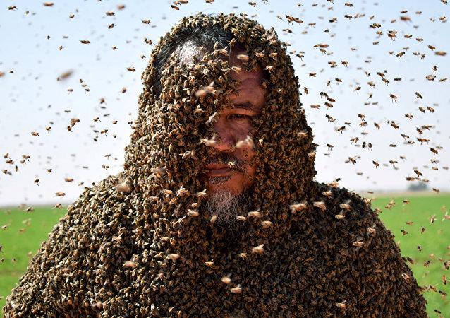 沙特阿拉伯的一只蜜蜂弄砸了要创造世界纪录的尝试