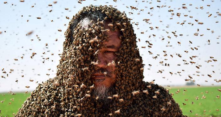 沙特阿拉伯的一隻蜜蜂弄砸了要創造世界紀錄的嘗試