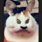 Кот на видео с фильтром Instagram