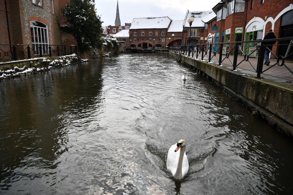 在离马尔廷斯(Maltings)购物中心不远的运河上的天鹅