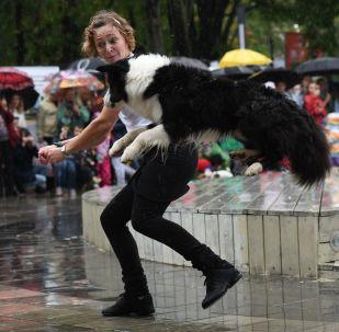「紅普列斯尼亞」公園舉行狗狗遊行