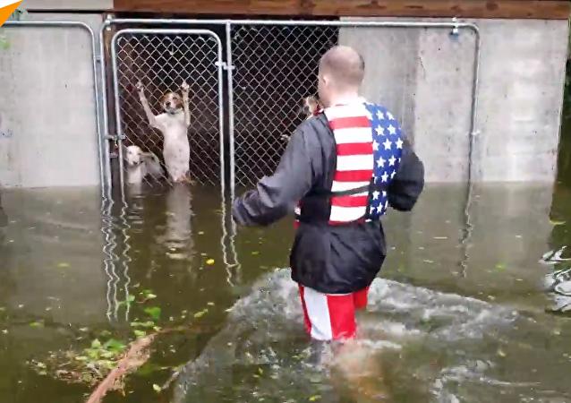 美国男子救出因飓风被困水中的狗