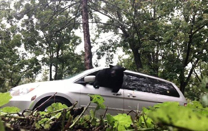 被锁在车里的狗熊撞破车窗玻璃逃生