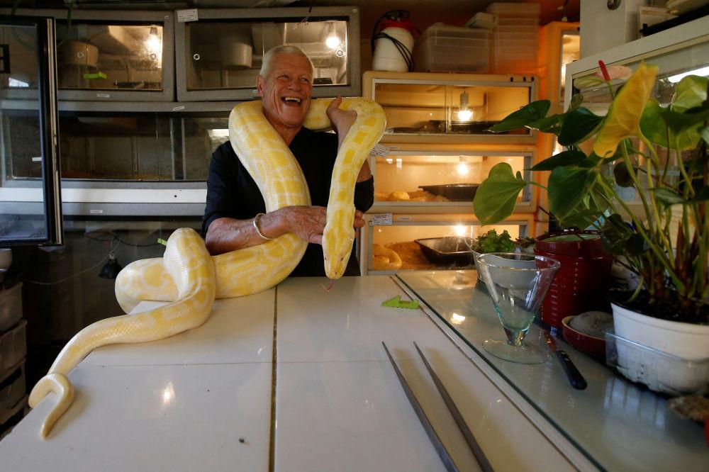 爬行動物愛好者菲利普·吉勒特在家裡和一條蟒蛇互動