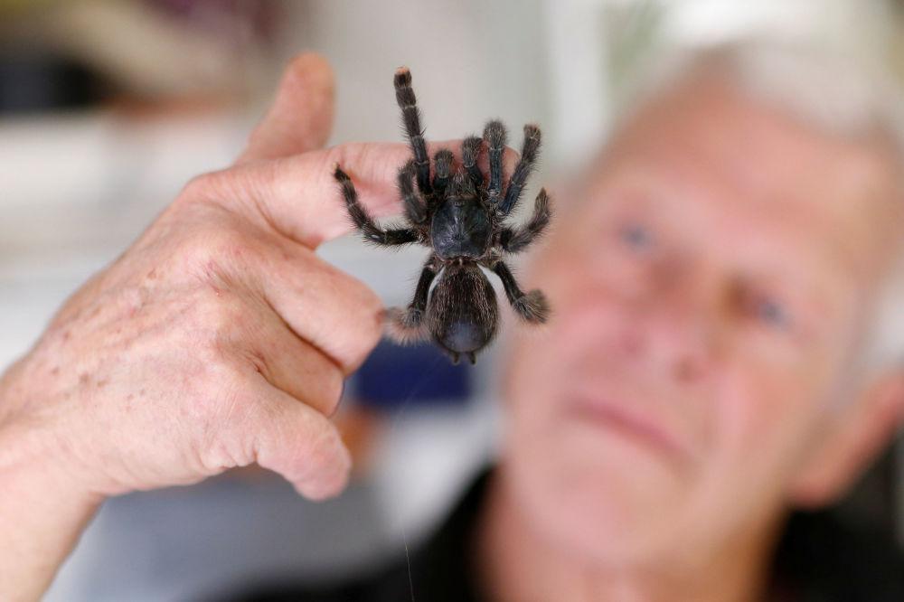 67歲的爬行動物愛好者菲利普·吉勒特和一隻狼蛛