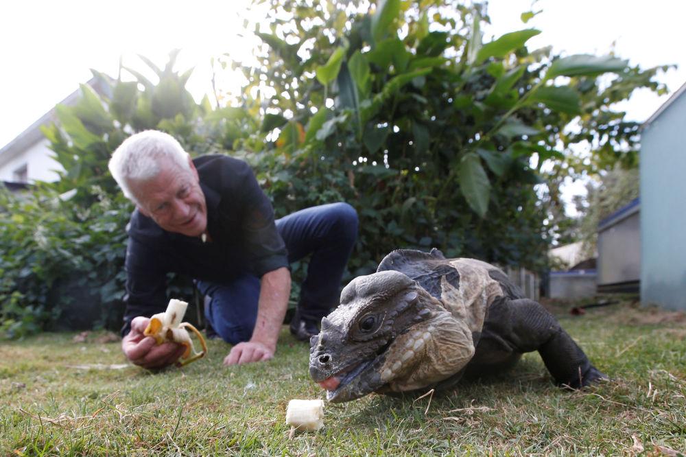 在花園餵鬣蜥