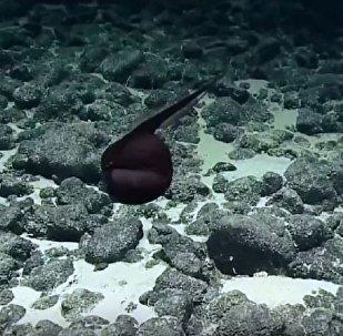 海底发现一只罕见的大嘴巴怪物