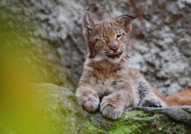 莫斯科動物園2018年共有800余只幼崽降生