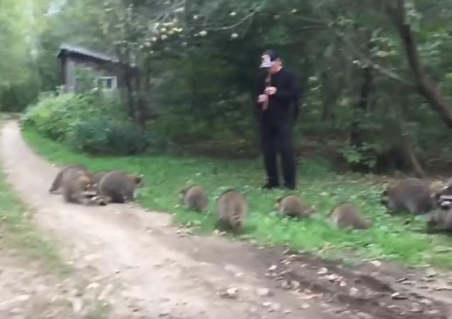 一名纽约市民用长笛演奏引来浣熊