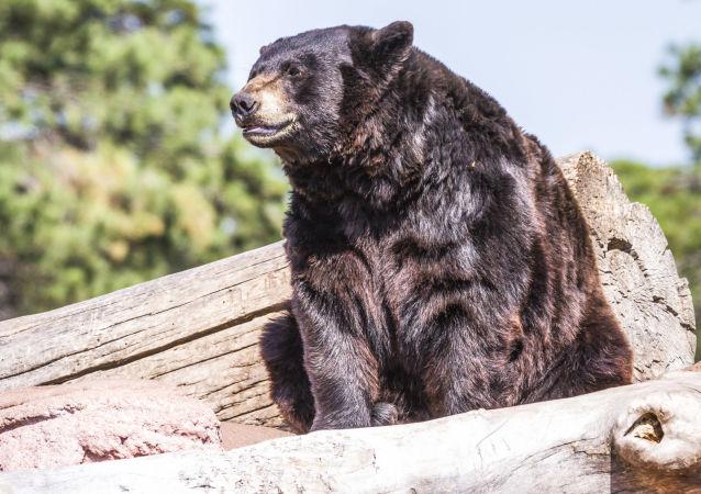 美國獵人差點被其槍殺的熊殺死