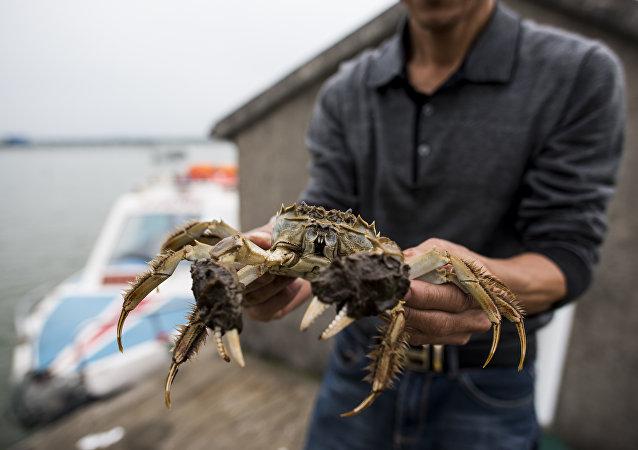 吉林琿春前三季度對俄貿易實現28.8億元 自俄進口鮮活螃蟹猛增