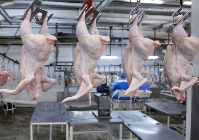 俄農業監督局:23家俄公司獲得禽肉對華出口權