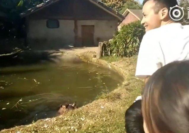中國動物園一名遊客讓河馬吞下一個塑料袋