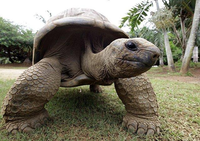 加拉帕戈斯群岛过百象龟被窃