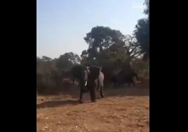 南非野生动物园一头大象袭击游客