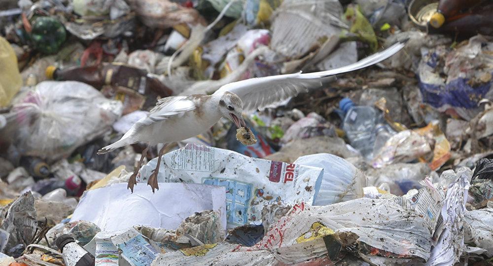 中国禁运塑料垃圾逼美国转向东南亚