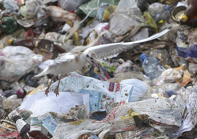 中國禁運塑料垃圾逼美國轉向東南亞