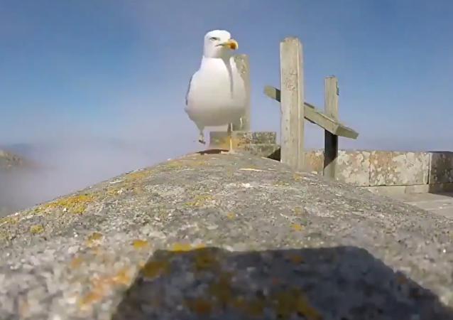 西班牙一只海鸥借游客的相机拍了一段自己的视频