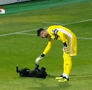 狗狗亂入球場 與球員溫馨互動