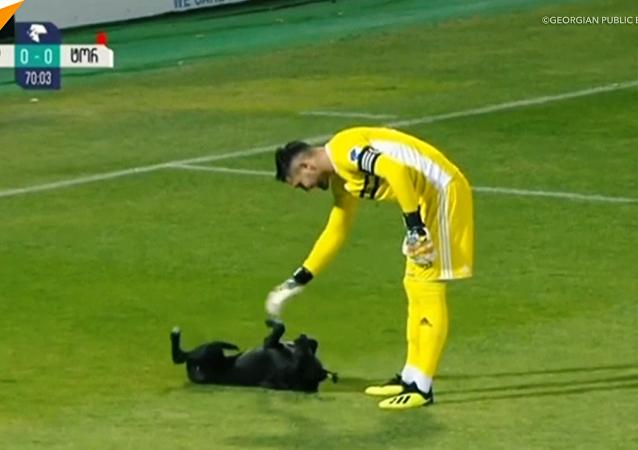 狗狗乱入球场 与球员温馨互动