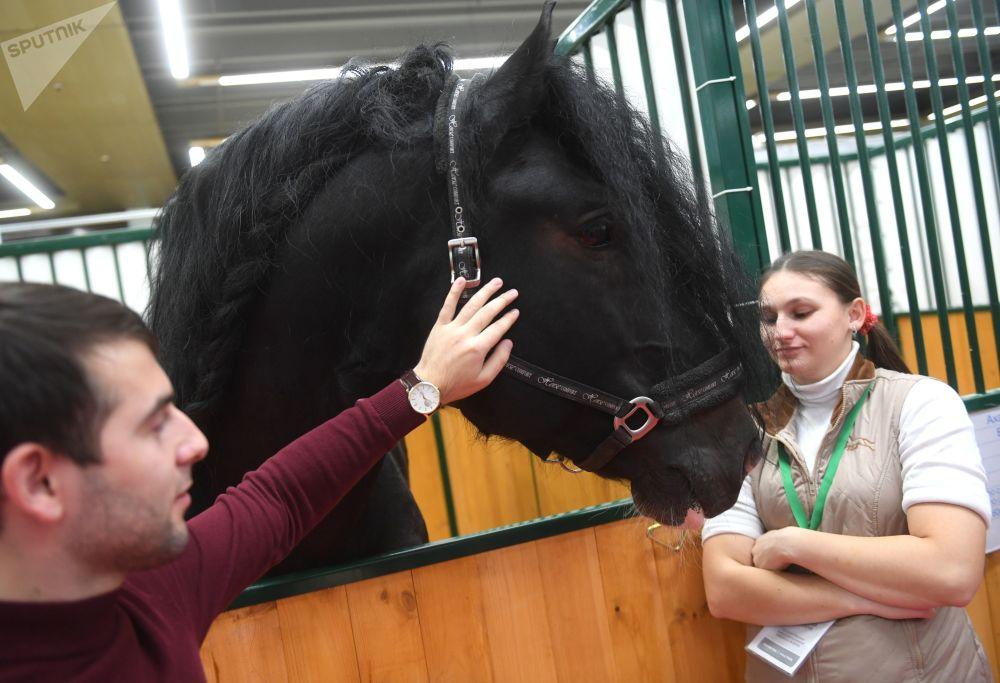佛明娜国营养马场展台