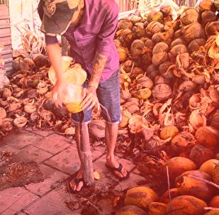 槟椥——越南南部的椰子树天堂