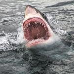 太平洋上一條鯊魚襲擊一名男孩