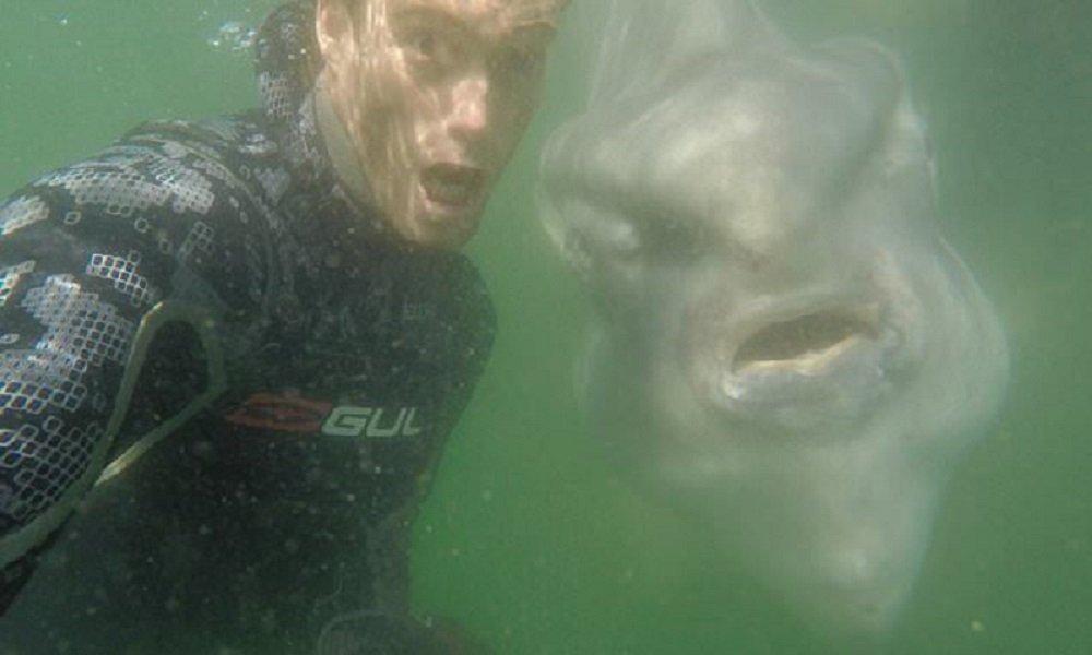 潛水員和巨大的月亮魚玩自拍