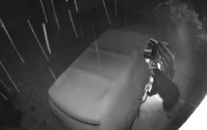 美国的一头熊自己打开了汽车门