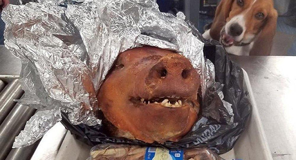 游客企图带猪头入美