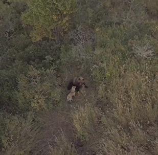 狗和熊:跨越物種的友誼