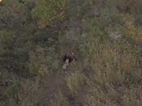 狗和熊:跨越物种的友谊