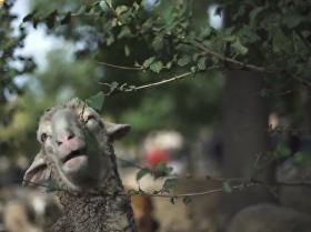 西班牙羊群大游行_SMPL