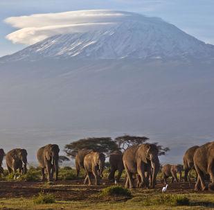 象群與乞力馬扎羅山,肯尼亞