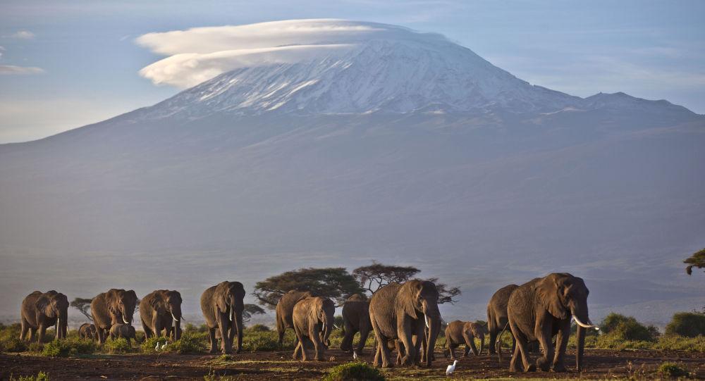 肯尼亞開放《獅子王》經典場景地旅遊
