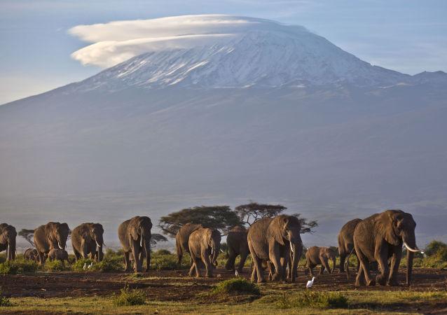 肯尼亚开放《狮子王》经典场景地旅游