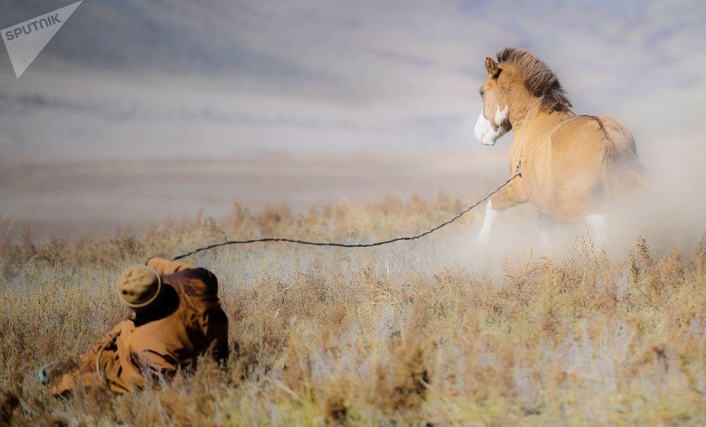 蒙古牧羊人和馬